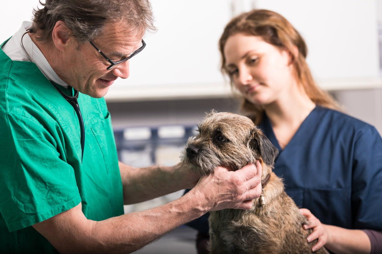 Tierarztpraxis Dres Reinartz Untersuchung Hund Jülich